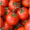 Tomate Matina (Semillas Ecológicas)