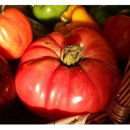 Tomate Rosa Olena Ukranian (Semillas no tratadas)