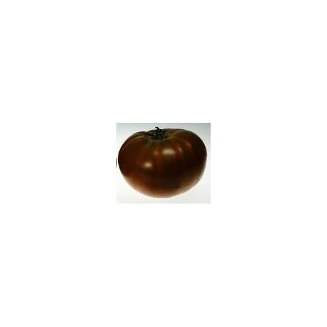 plantel de tomate Paul Robeson