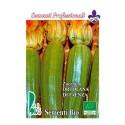 calabacin ortolana di Faenza - semillas ecológicas
