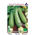 calabacin claro genoves - semillas ecologicas