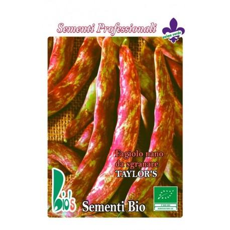 judia borlotto Taylor´s - semillas ecologicas