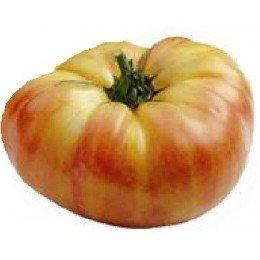 plantel ecologico de tomate Ananas