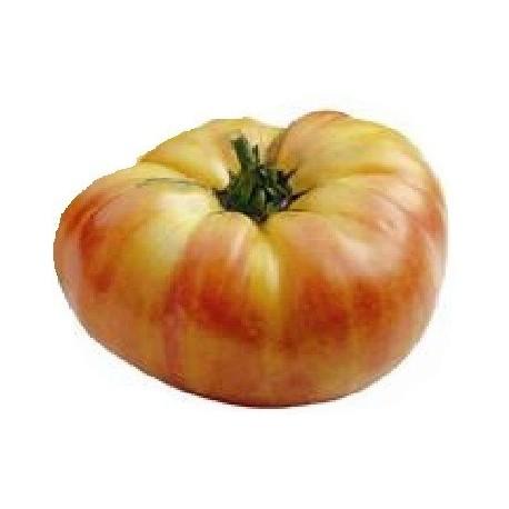plantel de tomate ananas