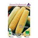 maíz dulce semillas ecologicas