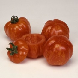 tomate red cavern (semillas ecológicas)