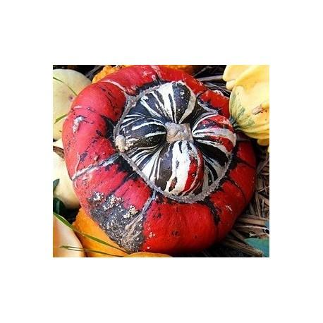 calabaza giraumon turban - turbante turco