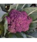 coliflor morada de Sicilia