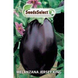 berenjena Jersey king - semillas
