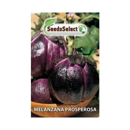 berenjena prosperosa- semillas