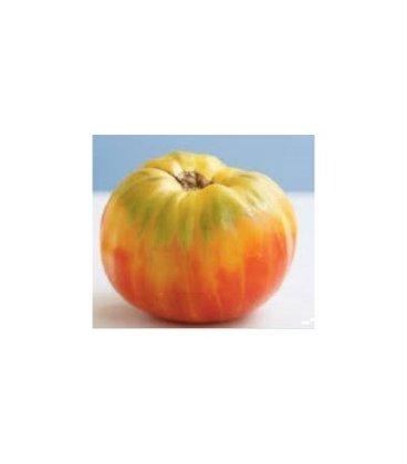 plantel de tomate mr stripei