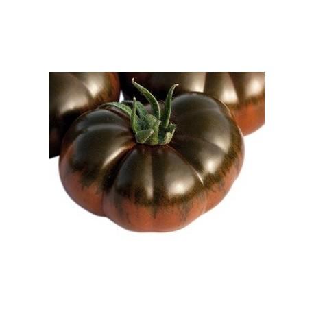 plantel de tomate RAF negro