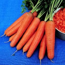 zanahoria rothild (semillas ecológicas)