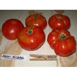 plantel ecológico de tomate Saint Michel