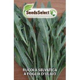 rucula selvatica hoja de olivo