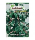 planta del cafe