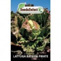 lechuga batavia pirate