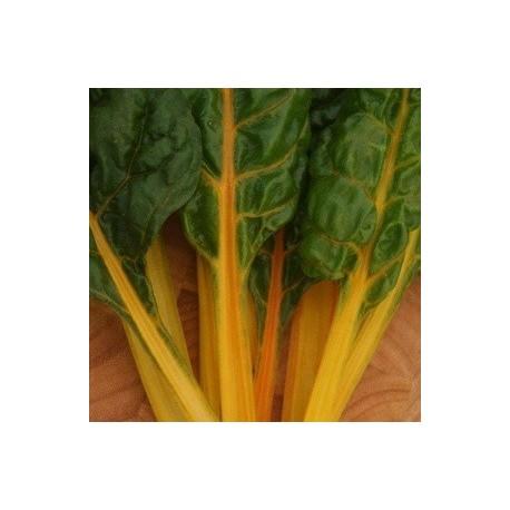acelga brigt yellow (semillas sin tratamiento)
