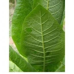 tabaco rubio de Virginia (semillas ecológicas)