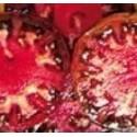 plantel de tomate negro de Tula