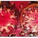 plantel ecológico de tomate negro de Tula