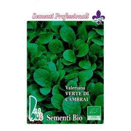 canónigos - valeriana verde de Cambrai (semillas ecologicas)