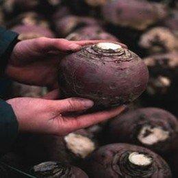 colinabo magres (semillas sin tratamiento)