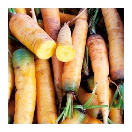 zanahoria jaune du doubs