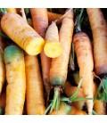 """zanahoria amarilla """"jaune du doubs"""" (semillas sin tratar)"""