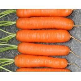 zanahoria nantesa (semillas ecologicas)