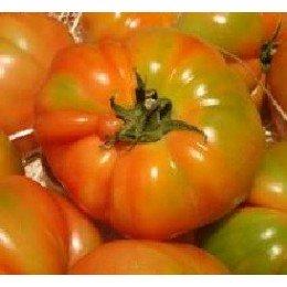 tomate Muchamiel (semillas ecologicas)