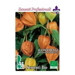 alquejenje - physalis alkekengi - (semillas ecológicas)