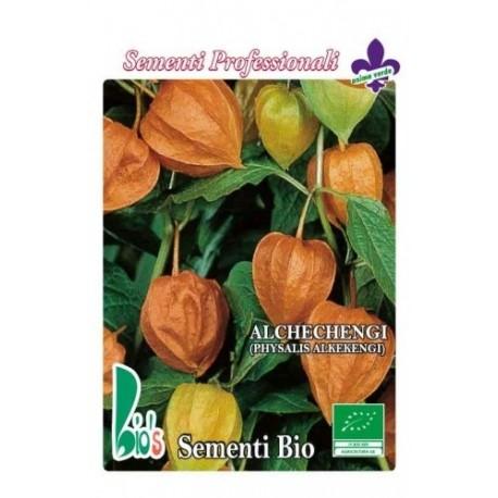 alquejenje - physalis alkekengi - (semillas ecológicas