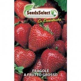 fresas - semillas