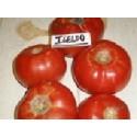 plantel de tomate Igeldo