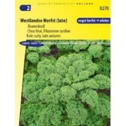 Kale Late Autumn (Westlandse Herfst late)