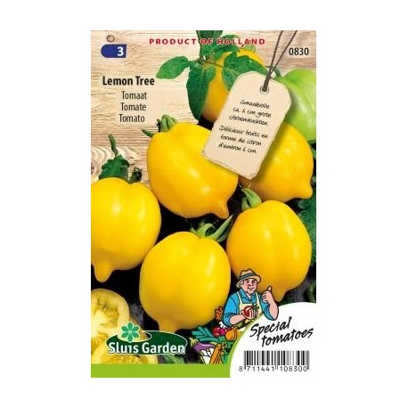 tomate lemon tree - semillas