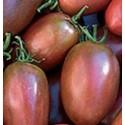 plantel de tomate purpura ucraniano