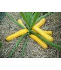 calabacin Sunstripe f1 (semillas sin tratamiento)
