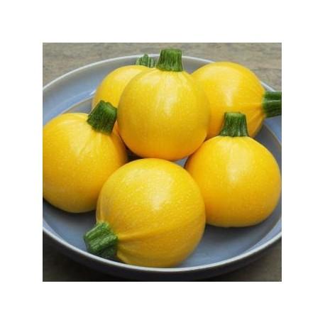 calabacin one ball (semillas sin tratamiento)