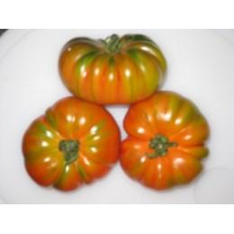 plantel de tomate RAF