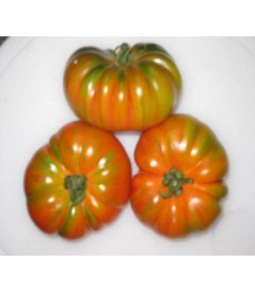 plantel tomate raf