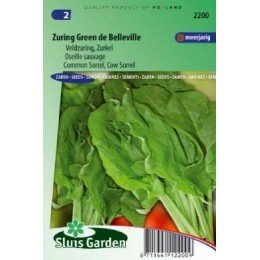 acedera verde de Belleville (Rumex acetosa)