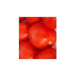 plantel de tomate pera
