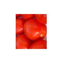 plantel de tomate pera - Rio grande