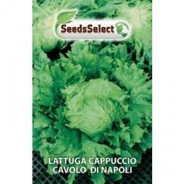 lechuga cavolo di Napoli