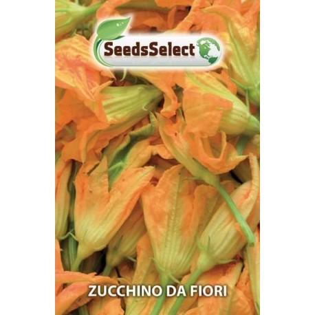 calabacin para flores - semillas