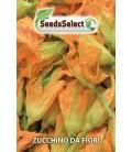 calabacin para flores