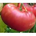 plantel de tomate mortgage lifter