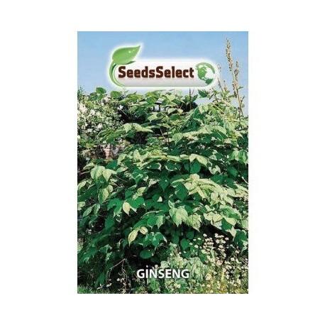 ginseng - semillas